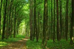 Natureza Imagem de Stock
