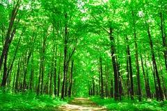Natureza Imagens de Stock Royalty Free