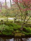 Natureza Foto de Stock