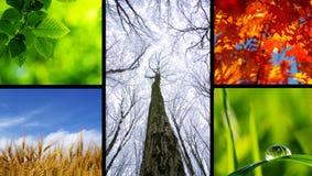 Natureza Imagem de Stock Royalty Free