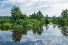 Natureza abstrata Fotografia de Stock Royalty Free