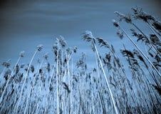 Natureza abstrata Foto de Stock Royalty Free