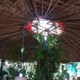 A natureza acolhedor do restaurante do lugar relaxa alimento eatary de Goa o bom fotografia de stock