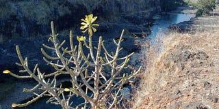 A natureza ajardina com rio ou montanha da Índia do lakhnadon, imagem tomada em fevereiro de 2018, paisagem Imagem de Stock Royalty Free