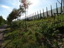 Natureza ao lado da estrada Imagem de Stock