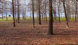 A natureza apresenta o arranjo do tronco de árvore foto de stock