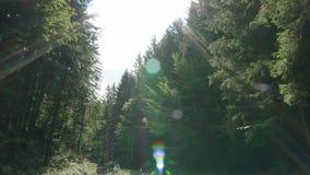 A natureza atirou em belas árvores com raios solares vídeos de arquivo