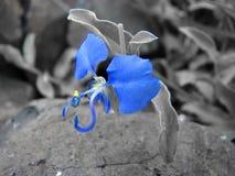 Natureza azul imagem de stock