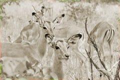 Natureza Babbies imagem de stock royalty free
