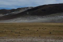 Natureza boliviana imagem de stock