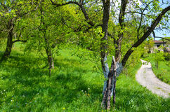 Natureza bonita Foto de Stock