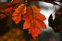 Natureza bonita Imagens de Stock Royalty Free