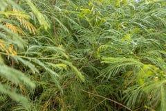Natureza bonita com árvore e a folha verde Fotos de Stock Royalty Free