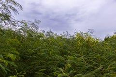 Natureza bonita com árvore e a folha verde Imagens de Stock