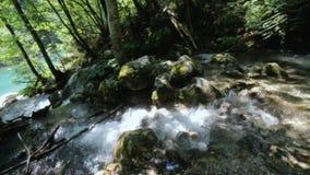 Natureza bonita com a corredeira do rio do whitewater da montanha que corre através da floresta verde luxúria e que cai sobre o m filme