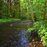 Natureza bonita com um rio das rochas e fundo colorido exterior da floresta com água Imagem de Stock Royalty Free