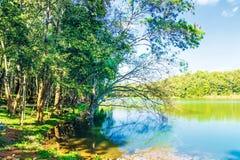 A natureza bonita da cena da árvore e do lago ajardina o fundo Imagens de Stock