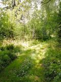 Natureza bonita de R?ssia Tome da natureza foto de stock