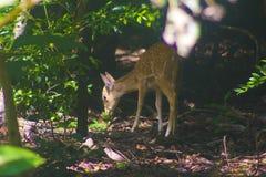 Natureza bonita de Sri Lanka fotografia de stock