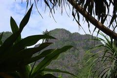 A natureza bonita de Tailândia com uma vista através das plantas à montanha imagem de stock