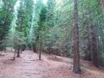Natureza bonita na manhã na floresta fotografia de stock