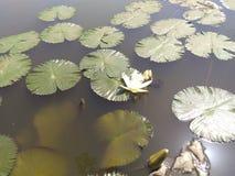A natureza bonita, plantas é boa fotos de stock
