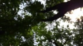 Natureza borrada bokeh da floresta das árvores filme