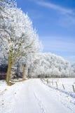 Natureza branca, céu azul. foto de stock royalty free