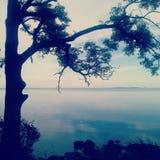 Natureza calma Fotos de Stock Royalty Free