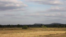 Natureza, campo, céu, lapso de tempo video estoque