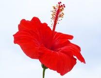 Natureza colorida Fotos de Stock Royalty Free