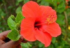 Natureza colorida Fotografia de Stock Royalty Free