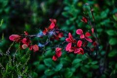 Natureza colorida 1 Fotos de Stock Royalty Free