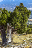 Natureza colorida bonita Fotos de Stock