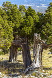 Natureza colorida bonita Fotografia de Stock Royalty Free