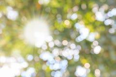 Natureza com as folhas do respingo e do ouro do sol imagem de stock