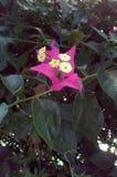 Natureza com flor roxo-cor-de-rosa imagens de stock royalty free