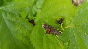 Natureza com leeves e um besouro imagem de stock royalty free