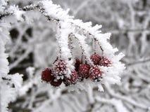 Natureza congelada imagem de stock royalty free
