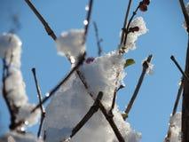 Natureza congelada Fotos de Stock Royalty Free