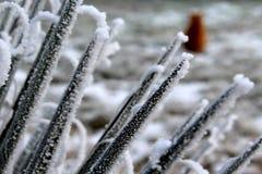 Natureza congelada Fotografia de Stock Royalty Free