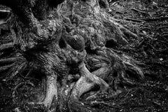 A natureza criou texturas diferentes da natureza imagem de stock