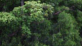 Natureza da árvore de chuva filme