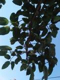 A natureza da árvore da luz de Sun sae escuro imagem de stock royalty free