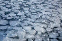 Natureza da borda do gelo marinho Fotos de Stock Royalty Free