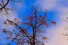 Natureza da floresta Imagens de Stock