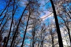 Natureza da floresta Imagem de Stock Royalty Free
