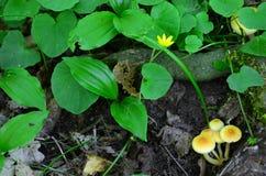Natureza da floresta Fotos de Stock Royalty Free