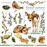 Natureza da floresta e grupo da aquarela dos animais selvagens fotografia de stock