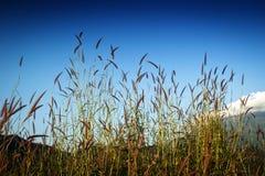 Natureza da grama Foto de Stock